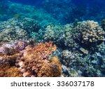 coral reef | Shutterstock . vector #336037178