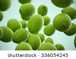 limes with water droplets... | Shutterstock . vector #336054245