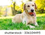 Stock photo dog playing 336104495
