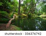 the terra nostra garden on sao...   Shutterstock . vector #336376742