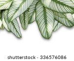 wide striped leaves frame  ... | Shutterstock . vector #336576086