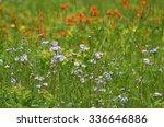 vibrant beauty of field flowers ...   Shutterstock . vector #336646886
