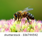 Honey Bee Macro  Shallow Depth...