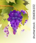 grape vector image | Shutterstock .eps vector #336836102