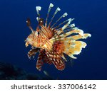 Common Lionfish  Pterois Miles...