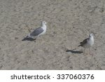 A Pair Of Seagulls Walking On...