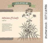 valeriana officinalis aka... | Shutterstock .eps vector #337116986