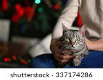 Beautiful Cat On Christmas Tre...