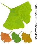 ginkgo biloba isolated leaf.... | Shutterstock .eps vector #337210406