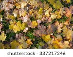 autumn leaves | Shutterstock . vector #337217246