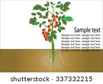 tomato plant with roots  red...   Shutterstock .eps vector #337332215