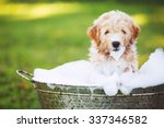 Stock photo adorable cute young puppy outside in the yard taking a bath covered in soapy bubbles 337346582