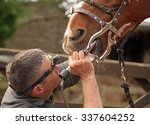 dental treatment from an equine ... | Shutterstock . vector #337604252