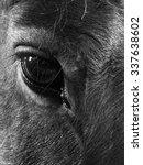 Horse Portrait  Black And White ...