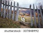 Fox Terrier Enjoying Nature