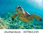 Stock photo sea turtle close up over coral reef in hawaii 337861145