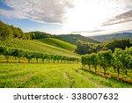 Vines In A Vineyard In Autumn   ...