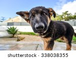 Stock photo german shepard puppy 338038355