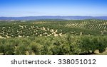 olive tree fields andalusia... | Shutterstock . vector #338051012