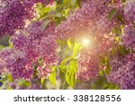 Branch Of Lilac Flowers With...