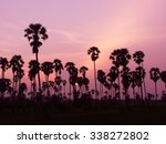Palm Trees Silhouette On Sunse...