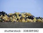 grapes | Shutterstock . vector #338389382