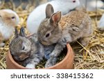 Stock photo rabbits sleep 338415362