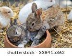 Rabbits Sleep. Two Cute Brown...