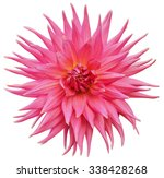 pink dahlia flower isolated on... | Shutterstock . vector #338428268