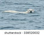 polar bear swimming in arctic... | Shutterstock . vector #338520032
