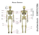vector illustration of human...