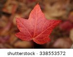 A Red Maple Leaf Just About...