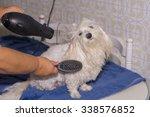 Stock photo pet care 338576852