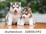 Stock photo dog cute in nature puppy dog puppy love 338581592