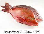 Two Red Snappers  White...