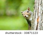A Grey Squirrel Perched On A...
