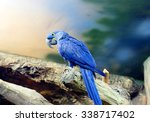 Blue Macaw Blue Macaw   A...