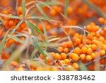 orange sea buckthorn berries on
