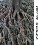 Banyan Tree Roots Over Earth...