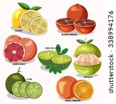 citrus fruits with name... | Shutterstock .eps vector #338994176