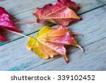 ivy leaves on a wooden... | Shutterstock . vector #339102452