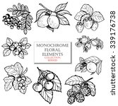flower set   Shutterstock . vector #339176738