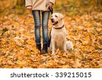 Stock photo portrait of a beautiful young woman with her dog while walking in the autumn park 339215015