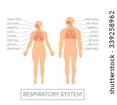 respiratory system of a human.... | Shutterstock .eps vector #339258962