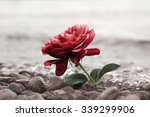 One Red Rose Flower At The...