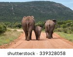 Stock photo rear view of three african elephants walking down a dusty gravel road with a baby walking between 339328058