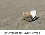 Empty Open Clam Shell Sitting...