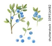 blueberry. hand drawn... | Shutterstock . vector #339516482