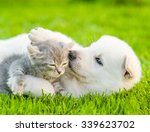Stock photo white swiss shepherd s puppy playing with tiny kitten on green grass 339623702