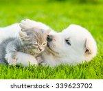 white swiss shepherd s puppy... | Shutterstock . vector #339623702